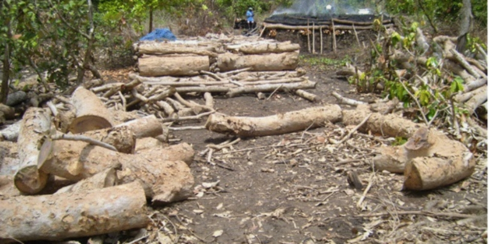 Destructive Charcoal Making in Ruvu Estuary Mangroves