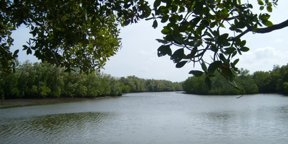 Mangrove creek at Litembe – Mnazi Bay