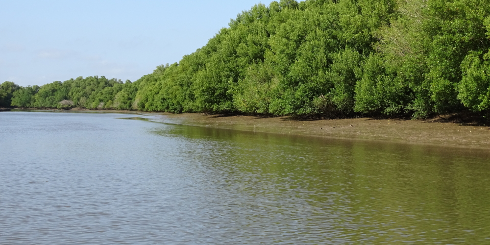 Mangroves in the delta