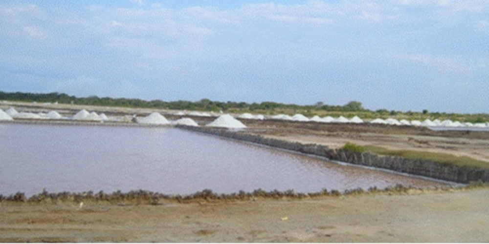 Solar salt pans at Saadani Chumvini on the edges of Wami mangroves