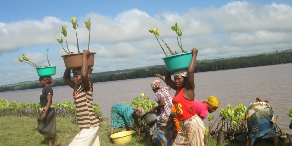 Seedlings transporting at the Limpopo estuary, Mozambique. H. Balidy